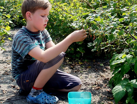 Mountain Mist Farms, Pigeon Forge, boy picking berries
