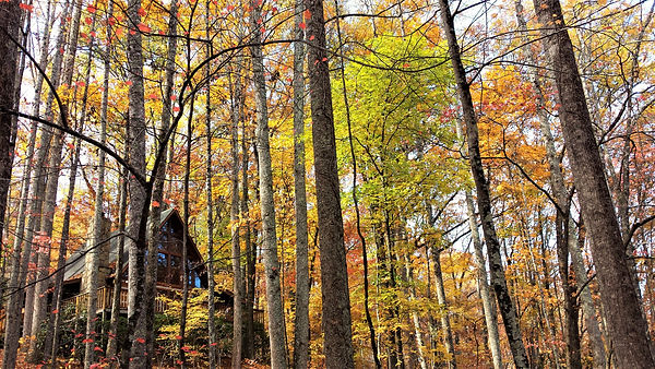 Photo I took in Twin Mountain Cabin, Pigeon Forge tn Fall, Autum beautiful trees