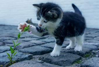 Cute kitten playing with a flower