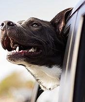 dog-1149964_640 sm.jpg