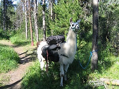pack llama