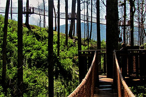 Anakeesta Skywalk tree canopy in Gatlinburg Tennnessee