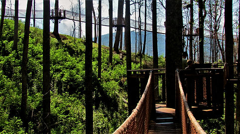 Anakeesta SkyWalk Gatlinburg TN tree canopy with moutain view