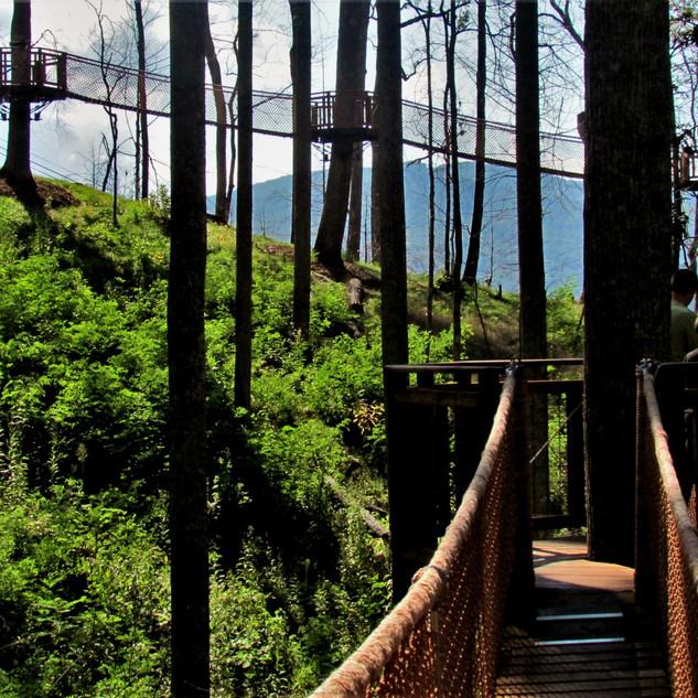 Anakeesta Treetop SkyWalk, Gatlinburg, TN