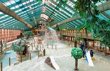 Wild bear falls at Westgate Resort, Gatlinburg watepark