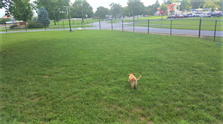 Sevierville Dog Park small dog area