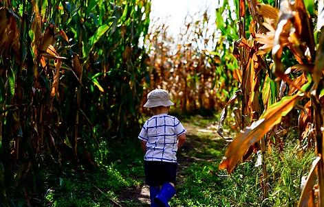 Kyker Corn Maze, Sevierville Tennessee, child in corn field