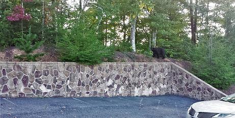 black bear in Gatlinburg resort