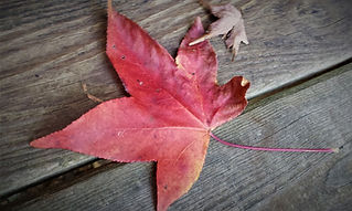 Autumn colored leave on wooden deck in Pigeon Forge, TN