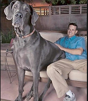 Guiness world record largest living dog and his owner