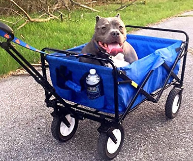 transport kid's and pet wagon with dog in it