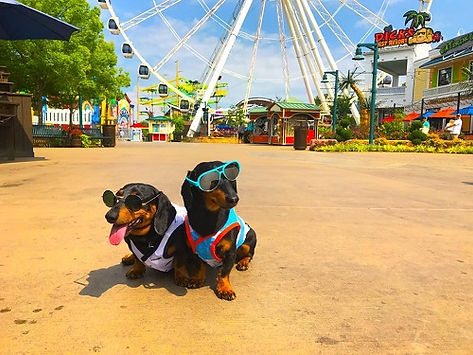 The Island in Pigeon forge-pet friendly, 2 dogs sit with sunglasses on in front of The Wheel