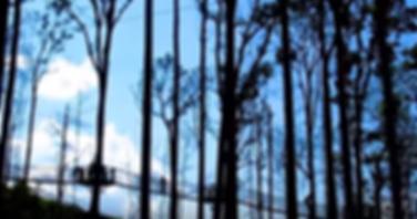 Tree Canopy Walk