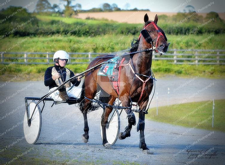 Ears Pricked Up - Harness racing - Ireland