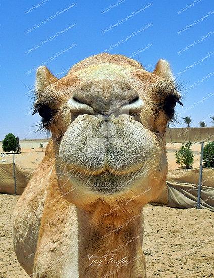 Desert Babe - UAE. Middle East
