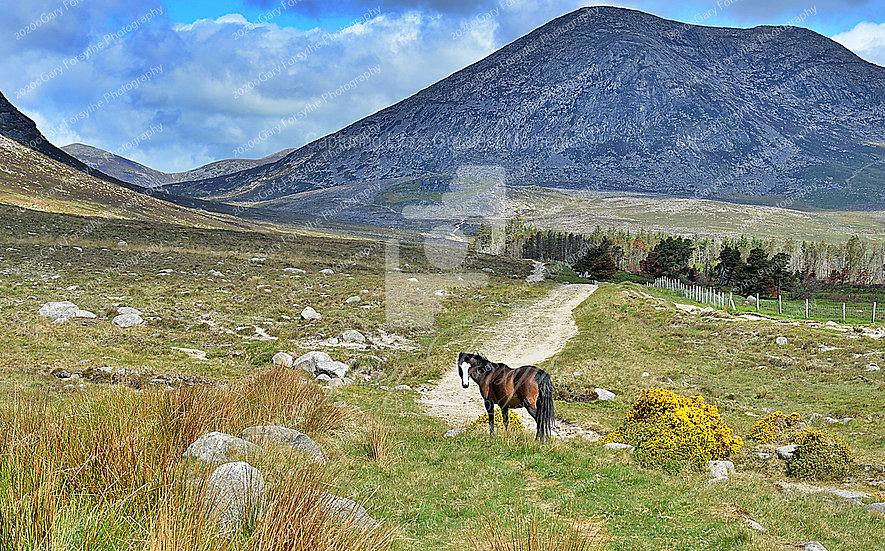 Up to 'Ben Crom' - 'Mournes' - Ireland
