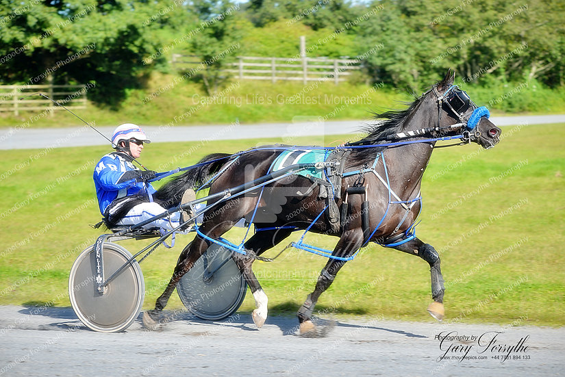 A Perfect Team - Harness Racing Ireland