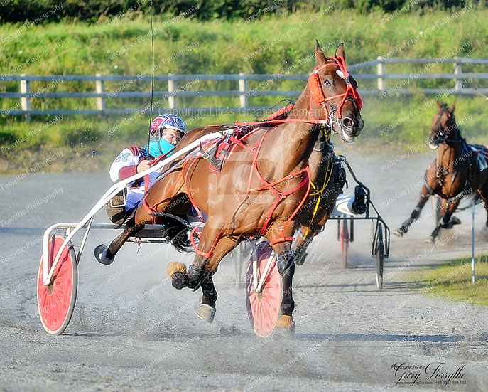 High on the Curve - Harness Racing Ireland