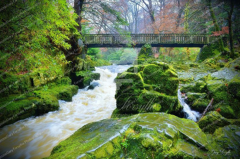 The 'Bridge' - Tollymore Ireland