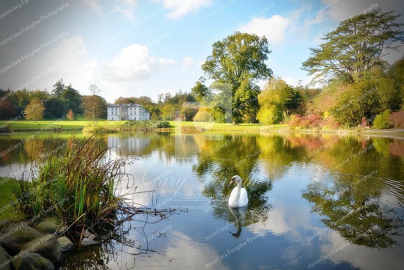 Swan lake 'Montalto' - Ireland