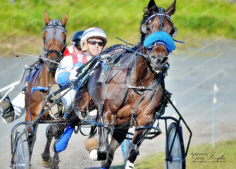 'Leading the Race' - Harness Racing Ireland