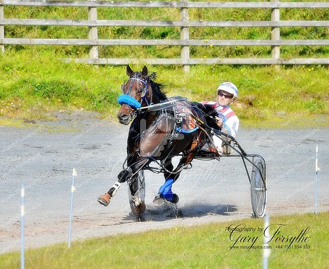 Stretching Her Legs - Harness Racing -  Ireland