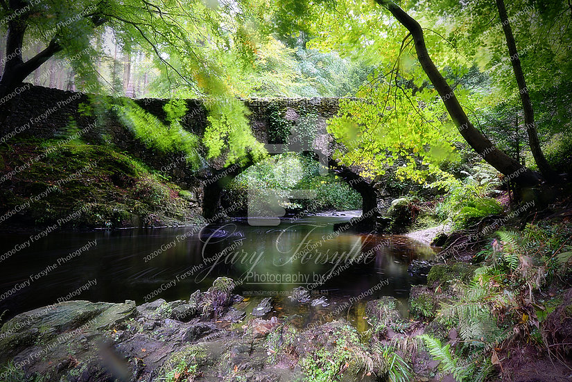 The Gentle 'Shimna' - Tollymore - Ireland
