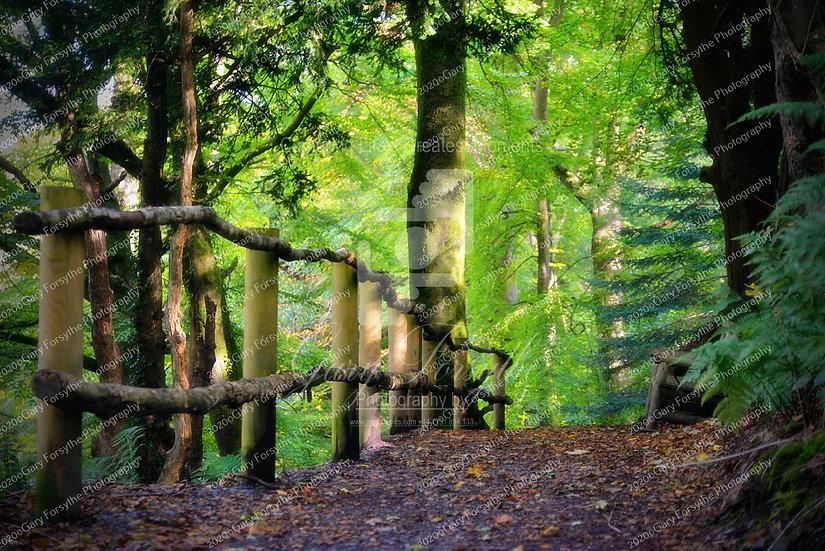 Through the Forest - 'Montalto' - Ireland