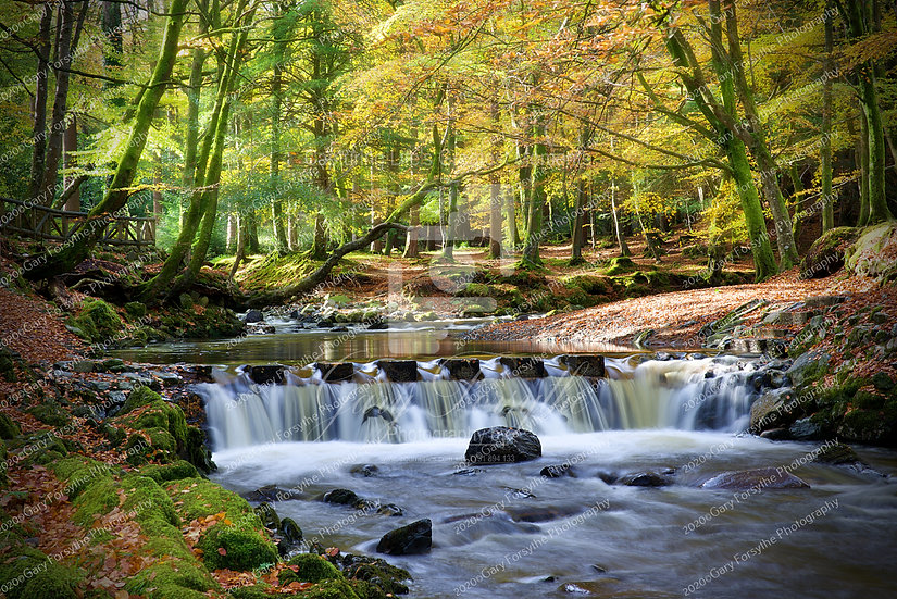 The 'Stepping Stones' Tollymore - Ireland
