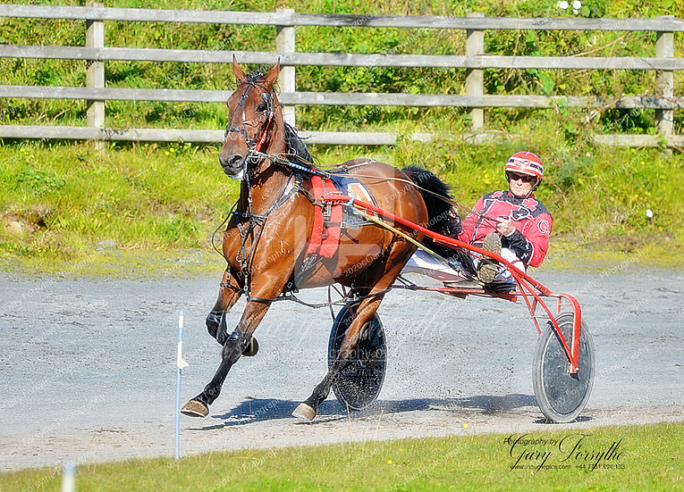 Gliding Along - Harness Racing Ireland