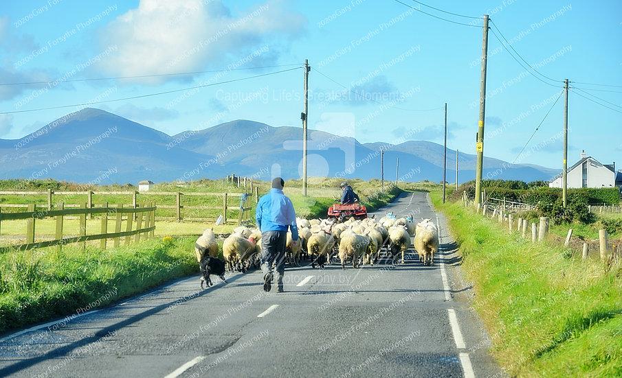 Heading Home - 'Tyrella' - Ireland