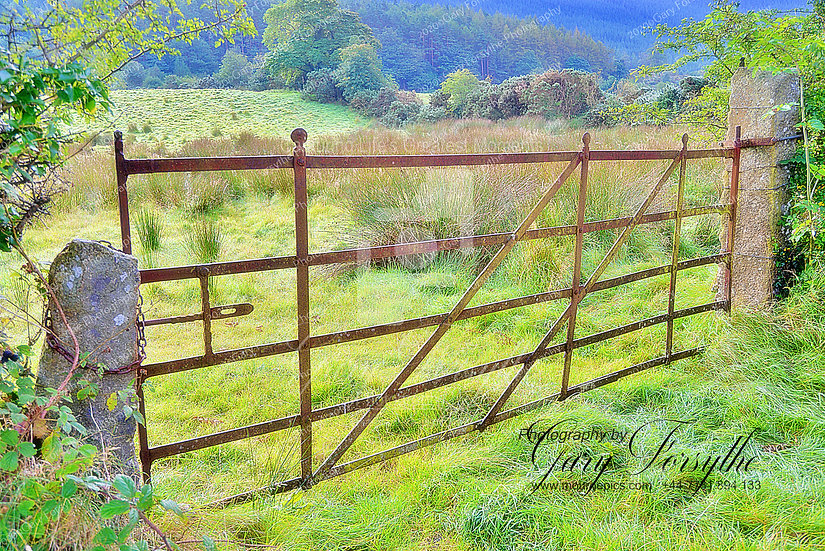Irish Field Gate - Ireland