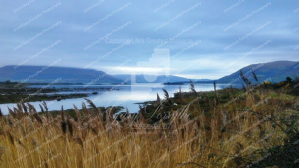 Early Morning 'Carlingford' Lough - Ireland