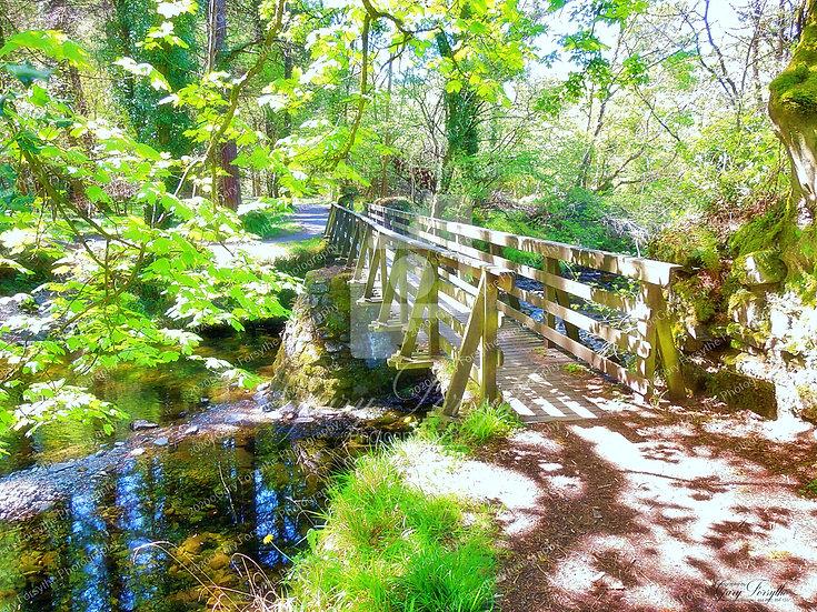 'Parnell's' Bridge 'Tollymore' - Ireland