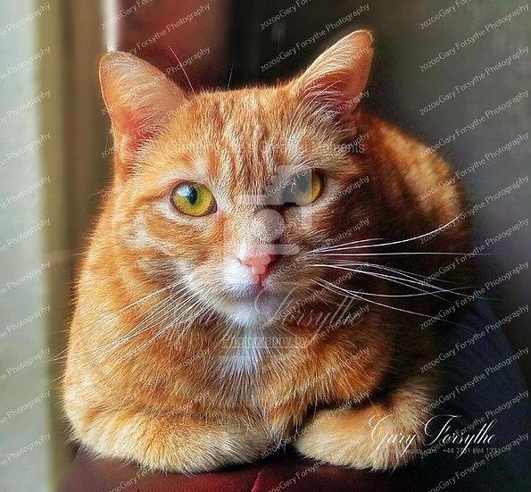'Cody'  Cutie Cat