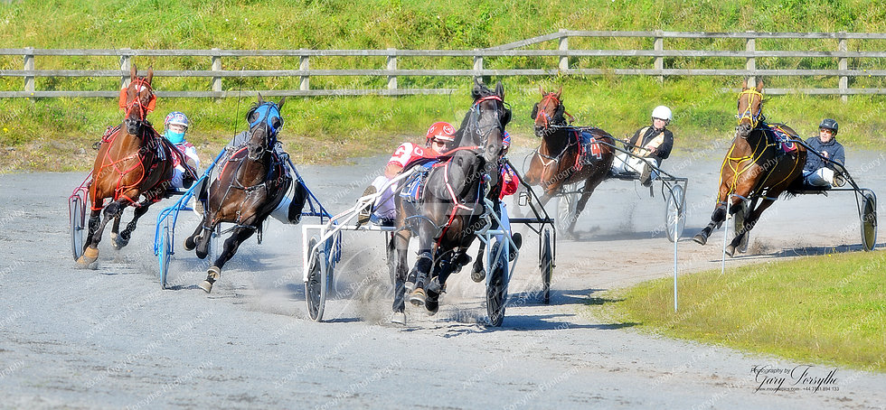 Finding the Line - Harness Racing Ireland
