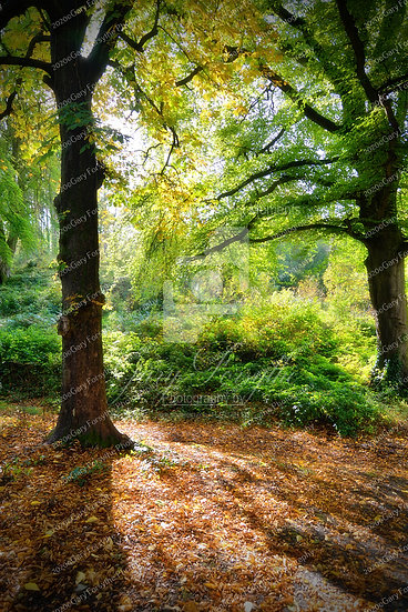 Autumn in the Forest - Ireland