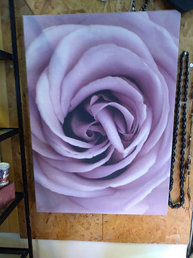Picture-rose.jpg