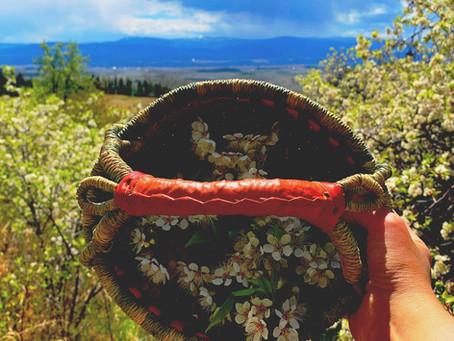 plum blossom oxymel