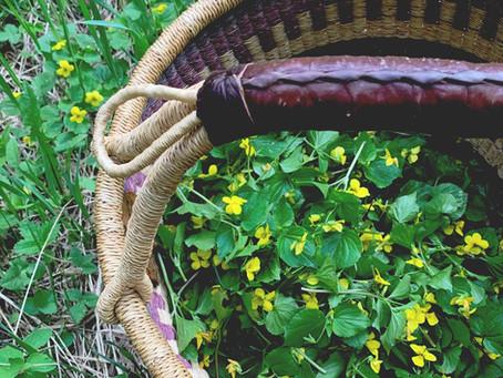 wild violet leaf + flower pesto