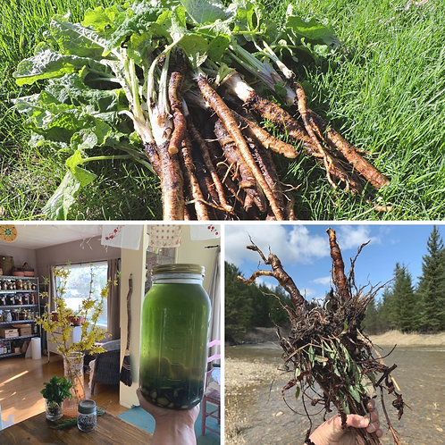 spring roots herbal remedy making class + one remedy option