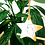 Thumbnail: Ceramic Star Hanging Decorations