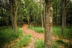 Prairie House trails