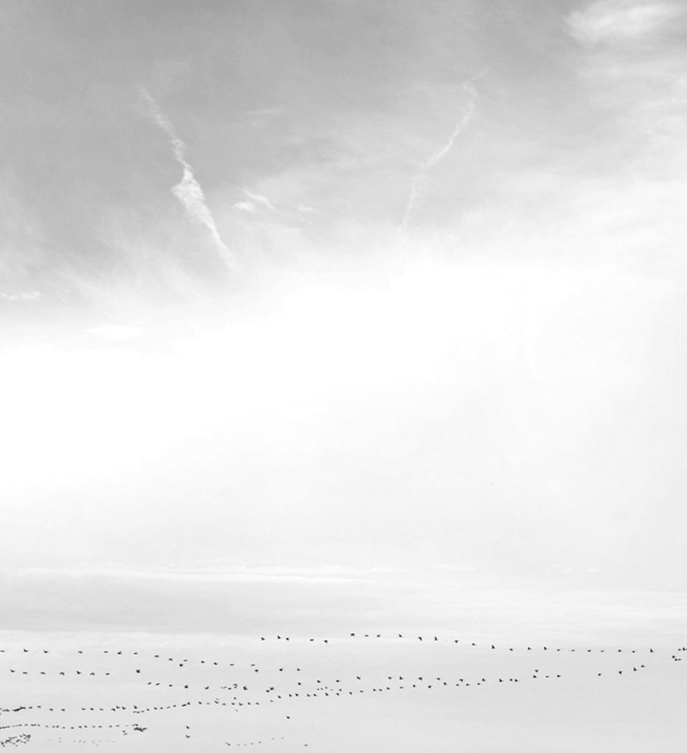 birds-flying-home-across-sky_edited.jpg