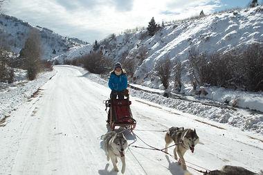 Kayenta Siberians Team 5.jpg