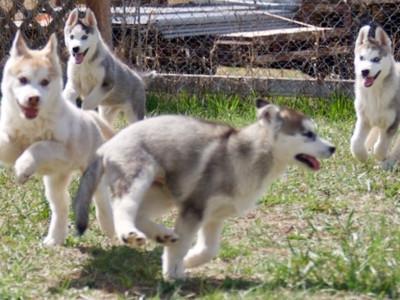 Past Puppies (Powder & Jack2020) (6).JPG