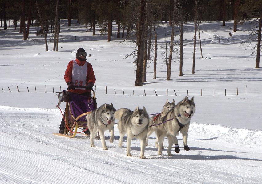 Kayenta Siberians Team (8) (1).jpg