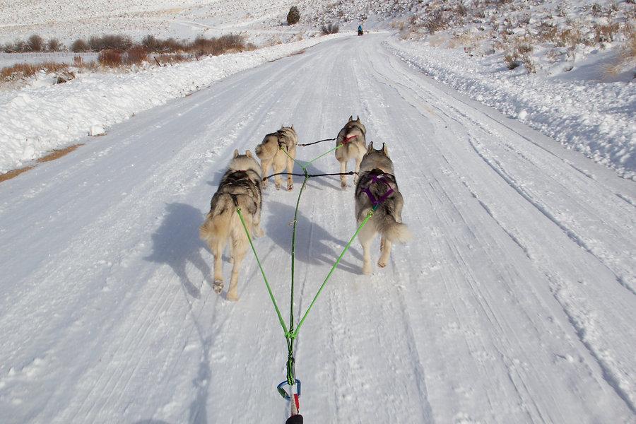 Kayenta Siberians Team 6 (1).jpg