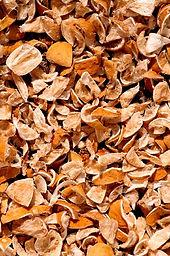 iStock_Orange Peel_web.jpg