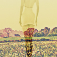 Meadow Stockings